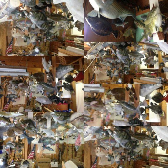 Half Mount Fish Replica Taxidermy | Raymond's Antiques